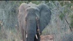 南非野生动物公园发动反偷猎新战役