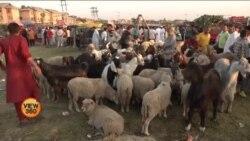 جموں و کشمیر: کرونا وائرس سے عید پر مویشیوں کا کاروبار بھی متاثر
