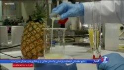 استفاده دانشمندان برزیلی از عصاره آناناس برای درمان زخم و بیماری های پوستی