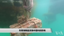 利用海鞘监测海中塑料的影响