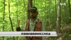 环保组织拯救森林和工作机会