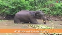 ہاتھی کو بچا لیا گیا