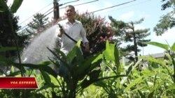 Thú vui điền viên của người Việt cao niên ở Mỹ