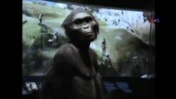 3.2 milyon il əvvəl yaşayan insan
