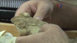 Digitalizando especímenes de fósiles