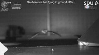 CIENCIA: Estudio de vuelo de animales: sorprendentes hallazgos