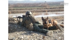 Top Honor Given to US Military Dog Injured in Combat