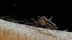 Lessons Learned From Ebola Might Help Fight Zika
