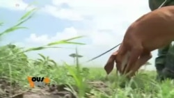 Vous et Nous : Au Kenya, des chiens anti-braconniers