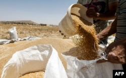 FILE - A farmer pours a bucket of wheat kernels into a sack during the harvest season, in a field in the countryside of al-Kaswa, south of Syria's capital Damascus, June 18, 2020.