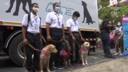 Թաիլանդում Քովիդ 19-ի հայտնաբերման համար կօգտագործվեն շներ