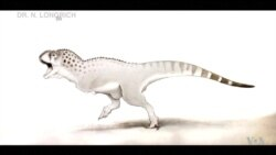 Newly ID'd Fossil Shows Unique African Dinosaurs