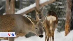 Priča o usvojenim divljim životinjama na Trebeviću