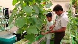 Хидропоничко земјоделство иднина на производството на храна во Саудиска Арабија