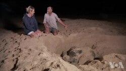 每年大约一百名野生动物保护者殉职