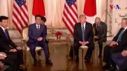 Tramp-Abe görüşü