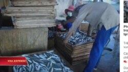 Quảng Trị phát hiện 30 tấn cá đông lạnh cực độc