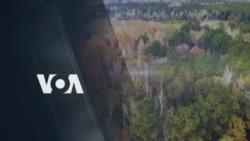 [아메리카 시골 체험단] 미국 나무꾼 '럼버잭'에 도전하다