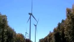 风力发电成野生动物杀手