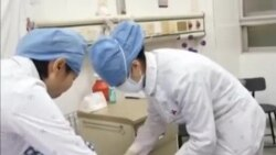 中國首次分離出兩株寨卡病毒
