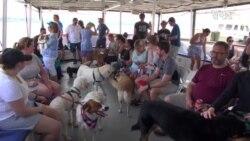 狗狗的河船巡游