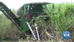 Queimadas em Malanje afetam fábrica de açúcar