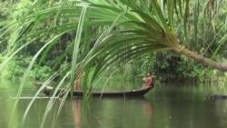 中国企业在柬埔寨筑坝情况