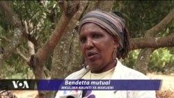 Mkulima Kenya aeleza hasara inayoletwa na nzi wanaoharibu maembe