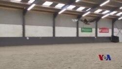 """老鹰捉""""小机"""":荷兰警方训练猛禽击落非法无人机"""