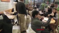 韩国小羊咖啡店羊年生意火爆