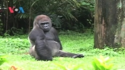 Hari Libur Satwa di Kebun Binatang Ragunan, Jakarta