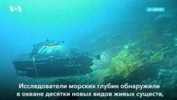 Новая жизнь в океане