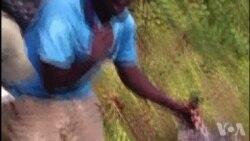 Des emplois pour les anciens braconniers au Rwanda (vidéo)