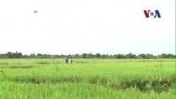 World Bank: Kinh tế Việt Nam năm nay tăng trưởng 5,4%