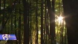დაავადებები ტყეს საფრთხეს უქმნის