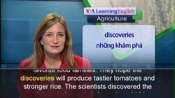 Anh ngữ đặc biệt: Better Rice and Tomatoes (VOA)