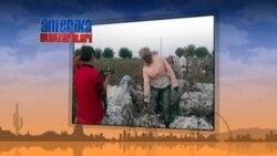 O'zbekistonda majburiy mehnat, paxta kampaniyasi - Jurnalist Dmitriy Tixonov bilan suhbat