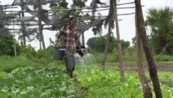 Demand Rising for Organic Produce in Cambodia