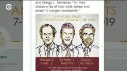 «Нобель» по медицине вручат трем врачам за открытия в области взаимодействия клеток и кислорода