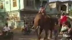 Dân Myanmar cưỡi voi biểu tình chống đảo chính