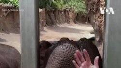 Арбуз для бегемота