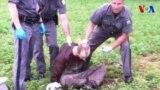 David Sweat bị cảnh sát tóm như thế nào?