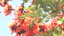 নানা আয়োজনে চট্টগ্রামে বসন্ত উৎসব