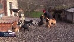 """""""Šapica"""" iz Zvornika spasila stotine pasa"""