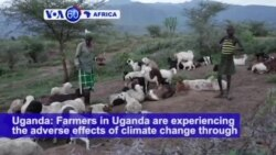 VOA60 Africa - Farmers in Uganda are experiencing the adverse effects of climate change