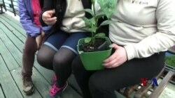 利用植物为手机充电