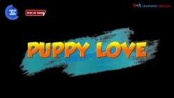Thành ngữ tiếng Anh thông dụng: Puppy Love   VOA