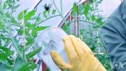 蜜蜂安装传感器帮助研究人员收集数据