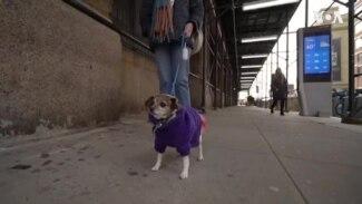 «Однажды в Нью-Йорке». Его знает каждая собака в Манхэттене