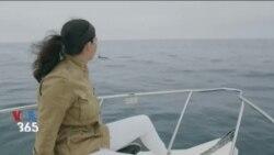 VOA Tek – دنیای ناشناخته نهنگ های دریایی